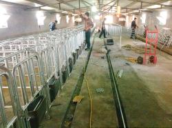 品质好的限位栏当选美固畜牧机械-猪用限位栏生产厂家
