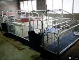 价格合理的猪用保育床当选美固畜牧机械-猪用保育床哪里有
