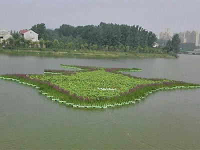 人工浮岛口碑好-供应河北品种纯的人工浮岛