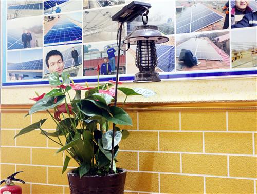 買安全的太陽能殺蟲燈,就選金太陽科技_上海太陽能殺蟲燈哪里找
