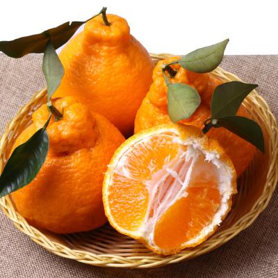 精品丑八怪柑桔,宿迁物美价廉的丑八怪柑桔批售