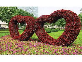 花海设计 野花组合 种子批发