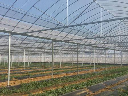 双拱双膜温室大棚建造商 双拱双膜温室大棚报价、如何设计