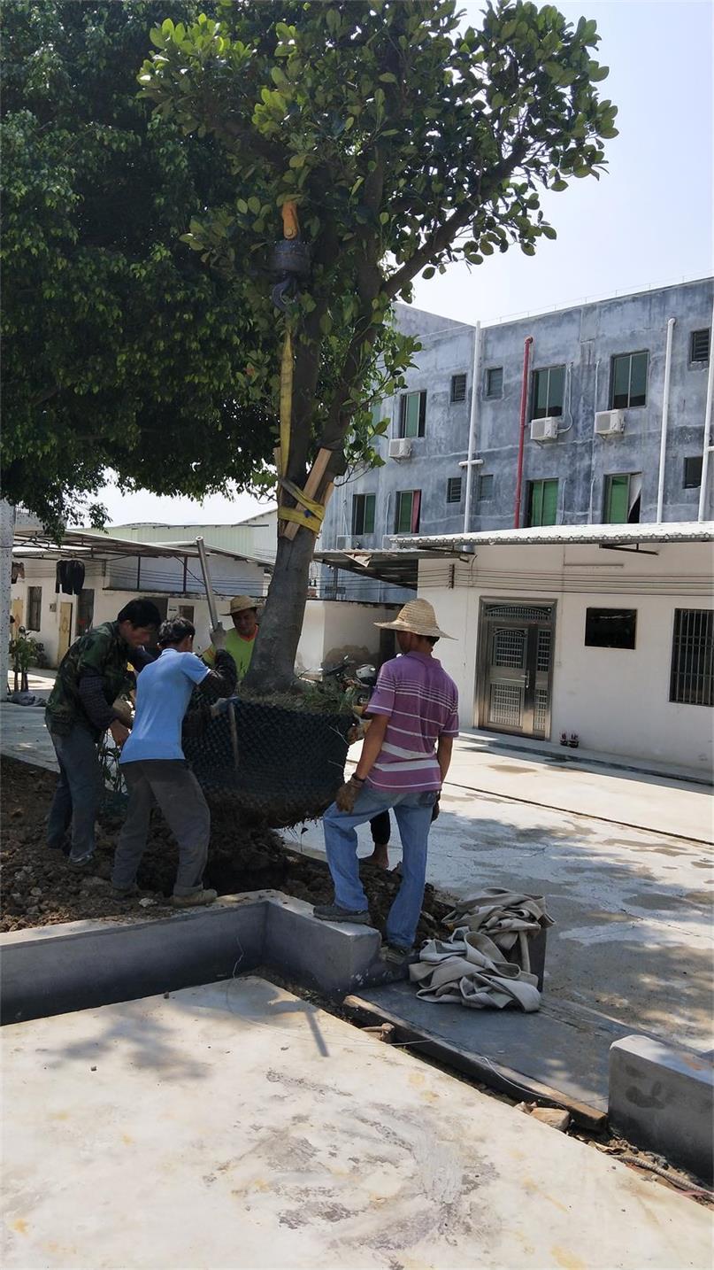 口碑好的园林绿化工程肇庆活力园林提供_园林绿化工程