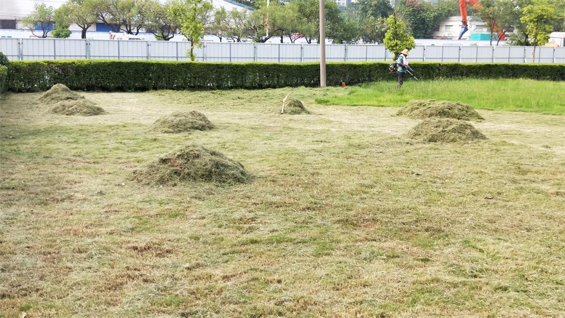 園林綠化養護管理公司 廣東可靠的綠化養護管理公司