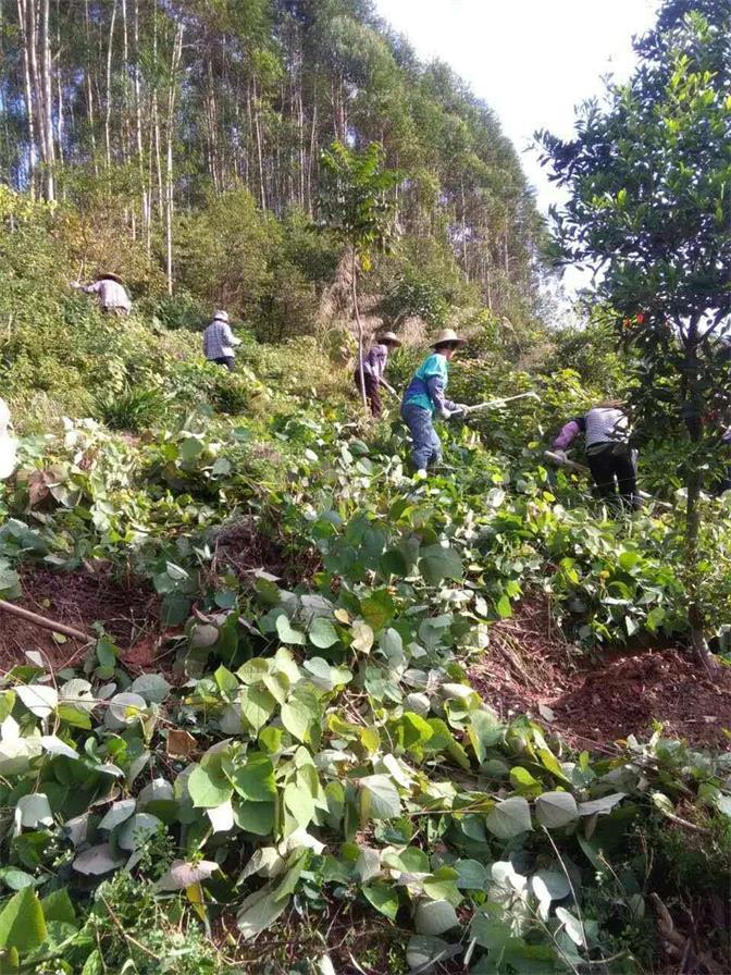 人工高山造林|找专业的园林绿化工程就到肇庆活力园林