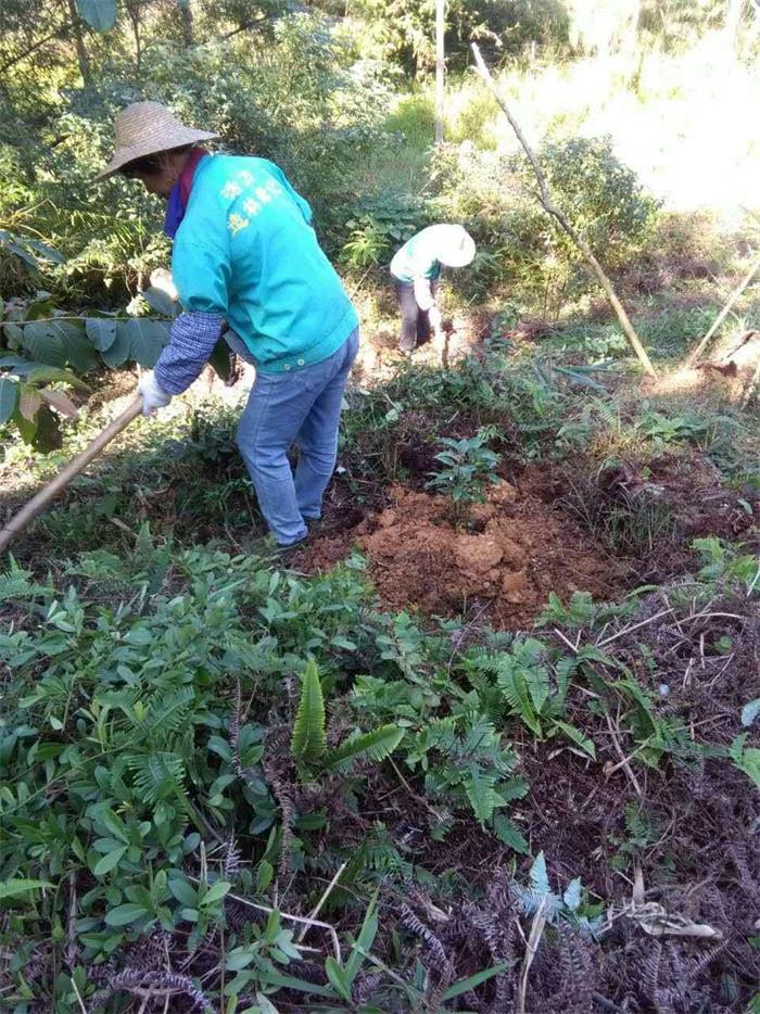 高山造林哪家好-广东园林绿化工程公司推荐