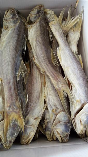 河源海味价格-源发食品供应报价合理的海味