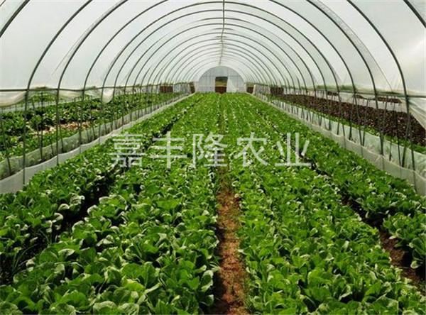 �xia�蔬菜大棚-专ye的广西温室大棚tuijian