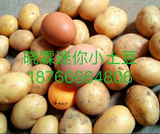 迷你小土豆多少錢_優惠的迷你小土豆,曉霖供應