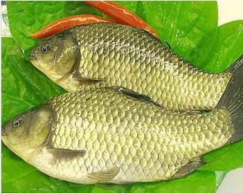 丽水生鲜配送机构——丽水生鲜配送找丽水乡野蔬菜配送