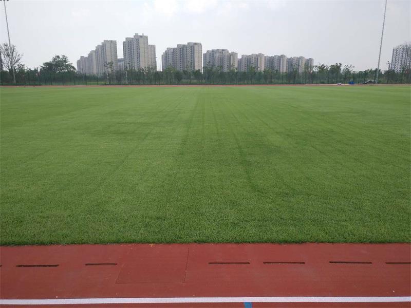 天然草坪足球场翻新