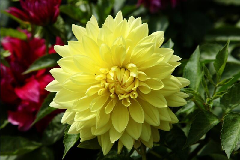 甘肃花卉销售-想买销量好的花卉-就到临洮绿洲花卉种植