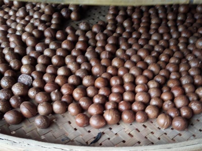 夏威夷果批发-信誉好的广西澳洲坚果厂家