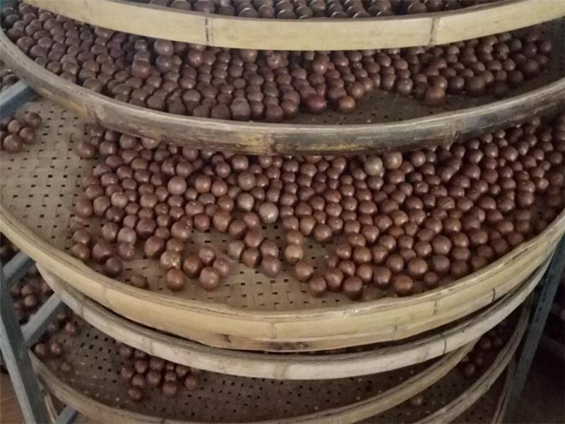 澳洲坚果批发厂家-南宁口碑好的广西澳洲坚果批发