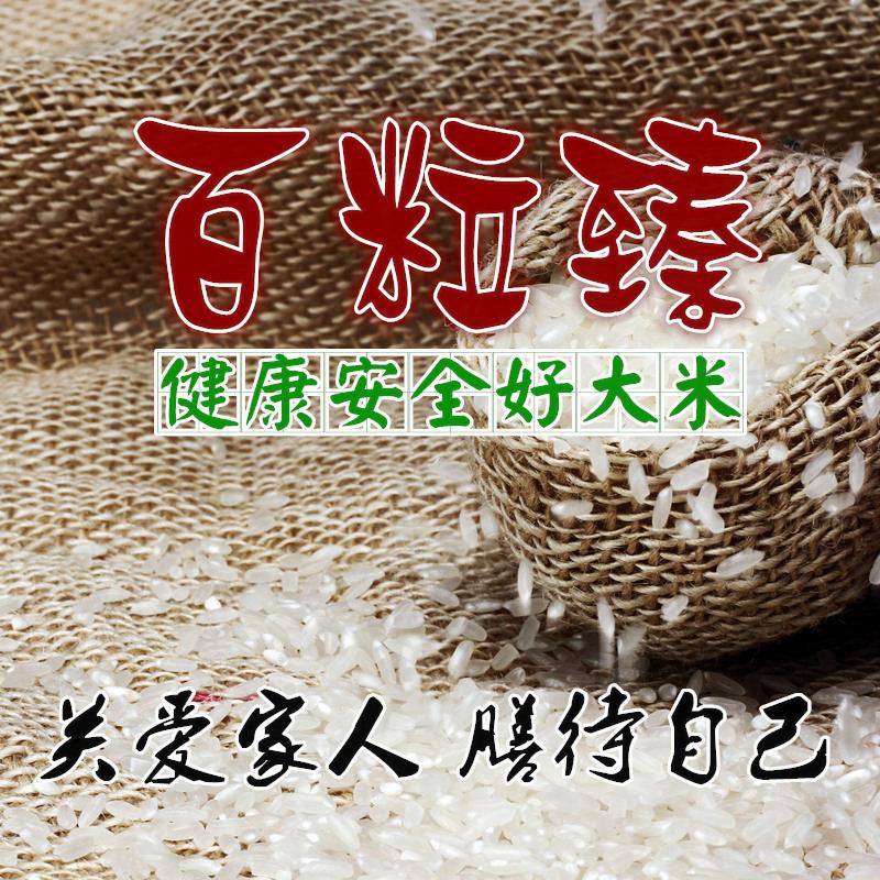 优质五常大米品牌推荐-臻品农业供应超值的百粒臻五常大米