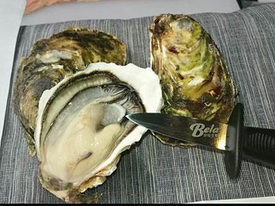 武汉生蚝|生蚝供应商|供货生蚝批发