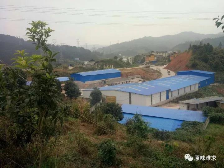 海狸鼠|贵州实惠的海狸鼠养殖