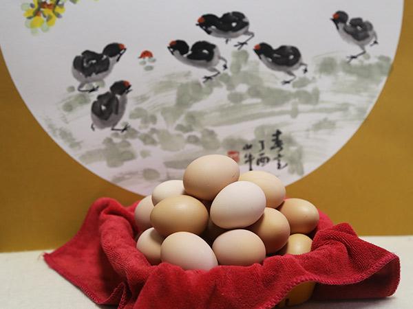 供应山东优惠的山鸡蛋——孝感粮油代理