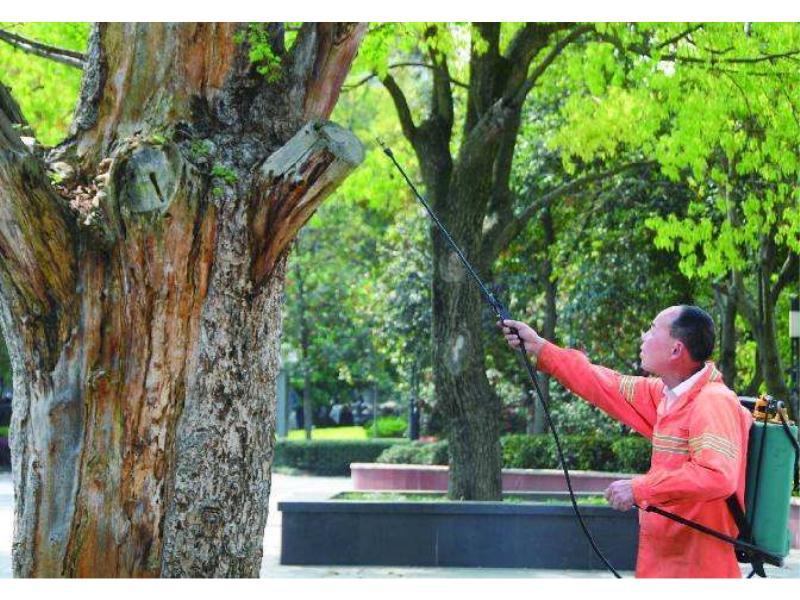园林有白蚁怎么办 怎么消灭-找晋江嘉信白蚂蚁防治中心