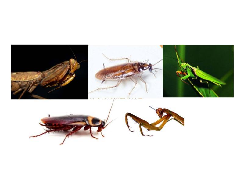 宁德蟑螂消杀|蟑螂消杀哪家好
