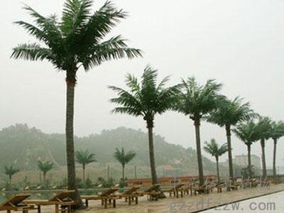 广州上等仿真椰子树——仿真椰树价格