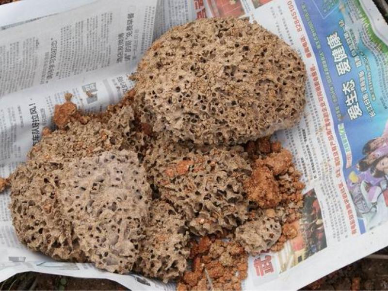 嘉信白蚂蚁防治供应信誉好的白蚁防治 -南平白蚁防治