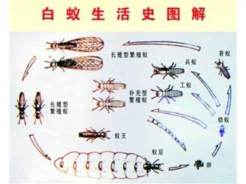 莆田白蚁防治-【荐】一级的白蚁防治