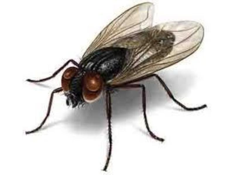 嘉信白蚂蚁防治供应有信誉度的苍蝇消杀 ,宁德苍蝇消杀
