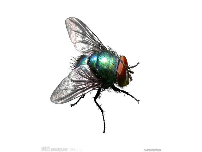 安全的苍蝇消杀 信誉好的苍蝇消杀哪里有