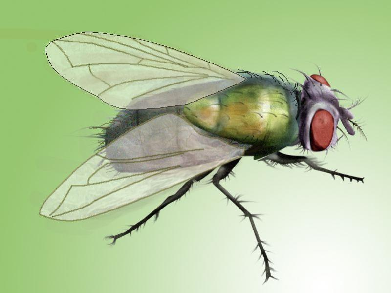 如何选择苍蝇消杀_专业提供苍蝇消杀