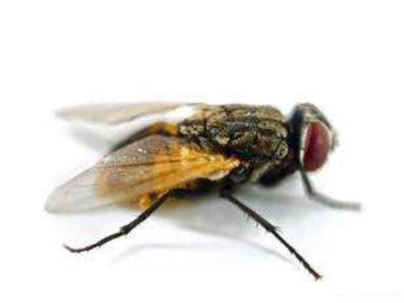 苍蝇消杀哪家好——苍蝇消杀哪里有