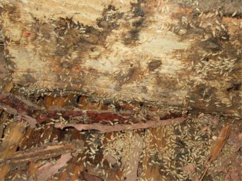 泉州专业的古建筑白蚁防治公司是哪家,福州古建筑白蚁防治