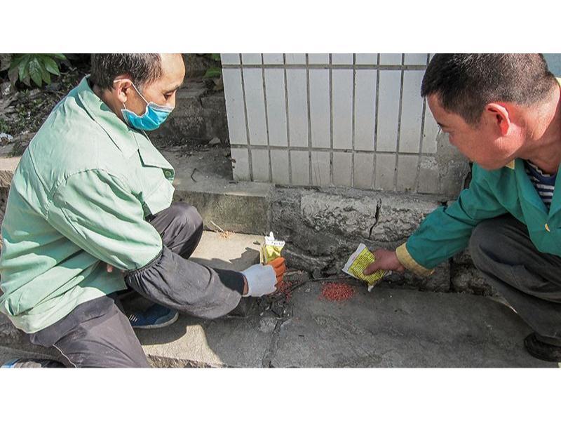 鲤城灭鼠咨询-哪儿有合格的灭鼠咨询
