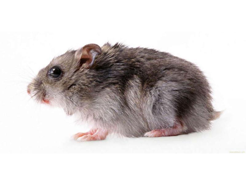 专业的灭鼠咨询首要选择嘉信白蚂蚁防治——金淘灭鼠咨询