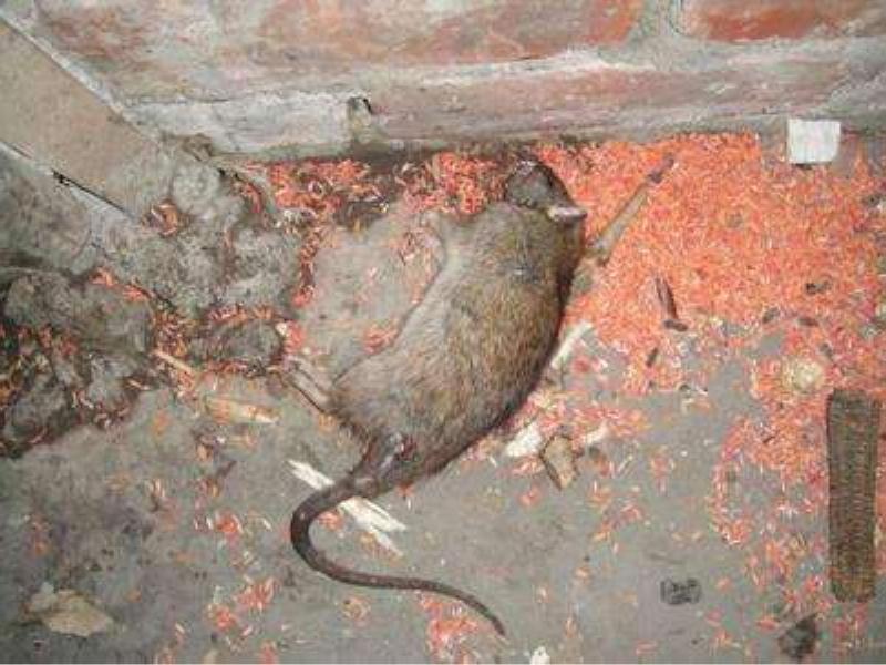 灭鼠咨询价格-专业的灭鼠咨询提供