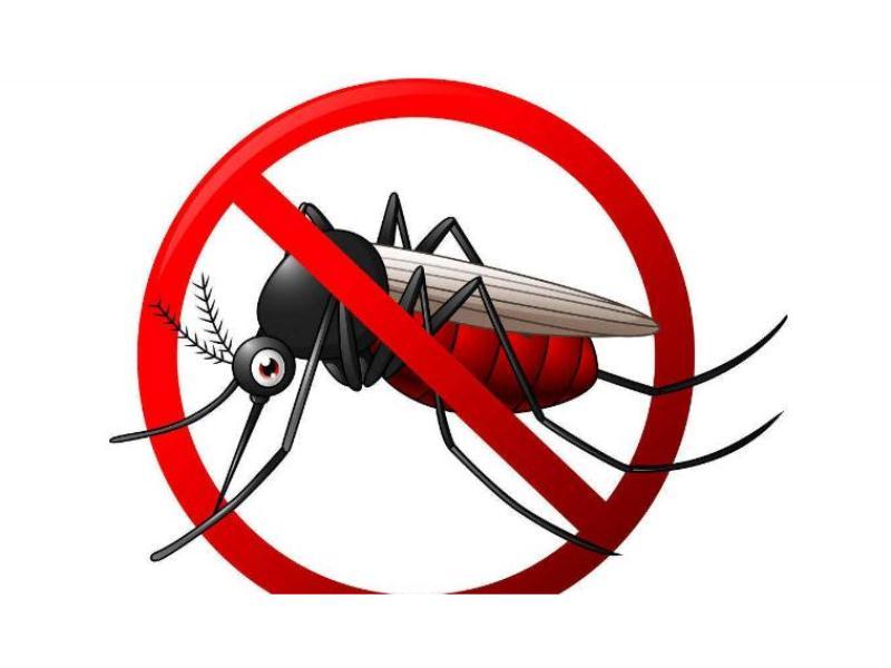找可信的杀蚊灭蚊就到嘉信白蚂蚁防治,南平杀蚊灭蚊
