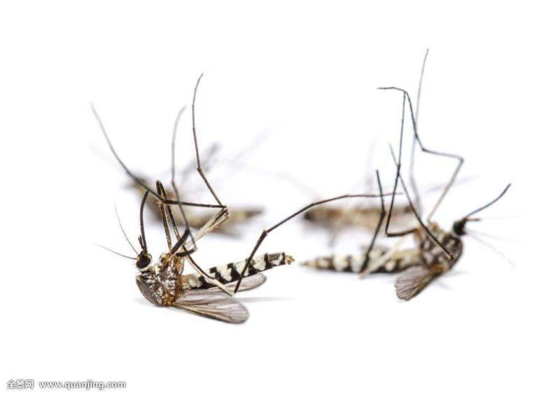 想要可靠的杀蚊灭蚊就找嘉信白蚂蚁防治_同城的杀蚊灭蚊