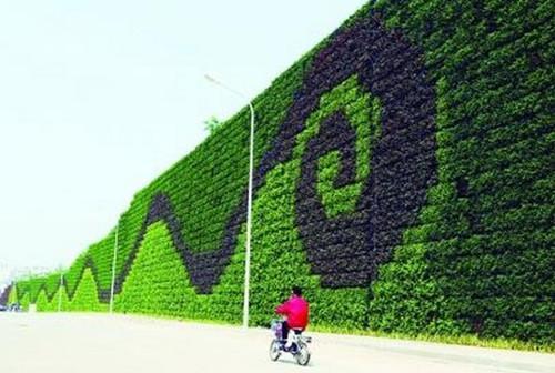 重庆图拉园林景观工程出售划算的植物墙——重庆生态植物墙