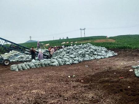 长春泥炭土价格-哪儿能买到质量好的泥炭土呢