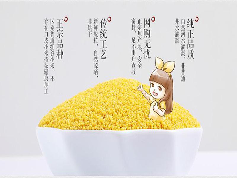 实惠的素食餐上哪买|赤峰素食餐小米