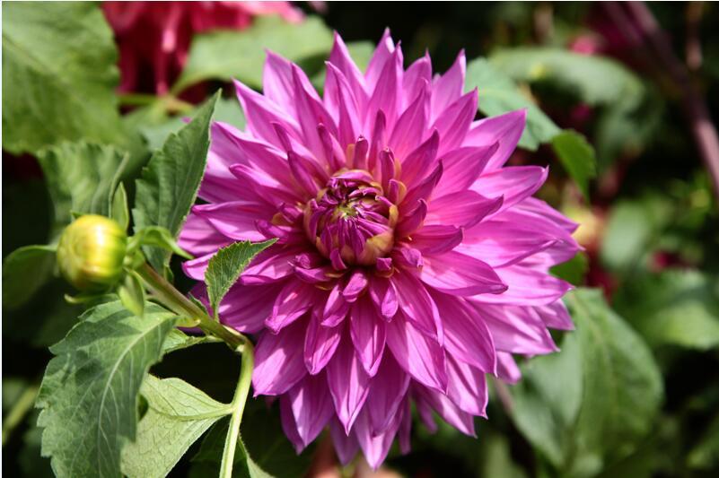 银川花卉批发-定西优惠的庭院花卉哪有卖
