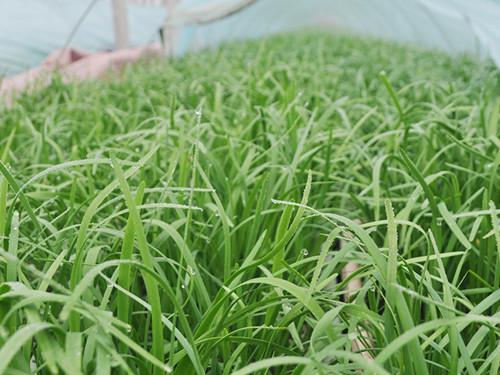 山东阳台蔬菜基地-长期供应阳台蔬菜