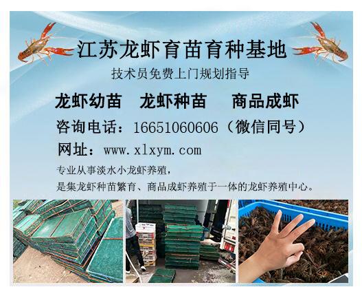 养殖龙虾效益,想买优质的龙虾,就到千耀农产品经营部