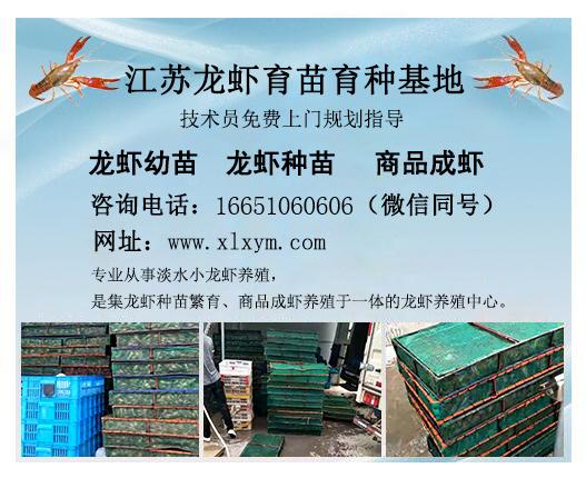 小龙虾品种,买龙虾当然是到千耀农产品经营部