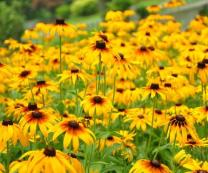 太阳花批发商-质量好的太阳花市场价格