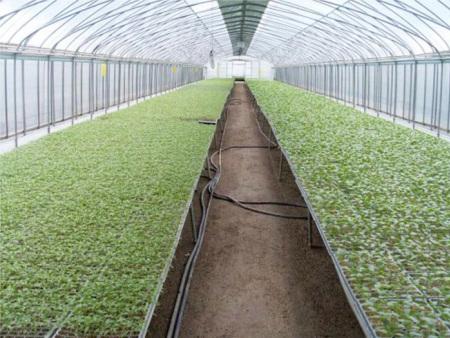 智能花卉温室大棚造价大约多少——智能花卉温室大棚建造商