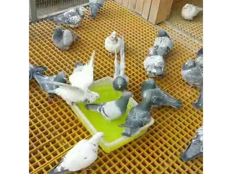 无锡养殖专用格栅生产厂家 为您推荐杭州民峰复合材料质量好的养殖专用格栅