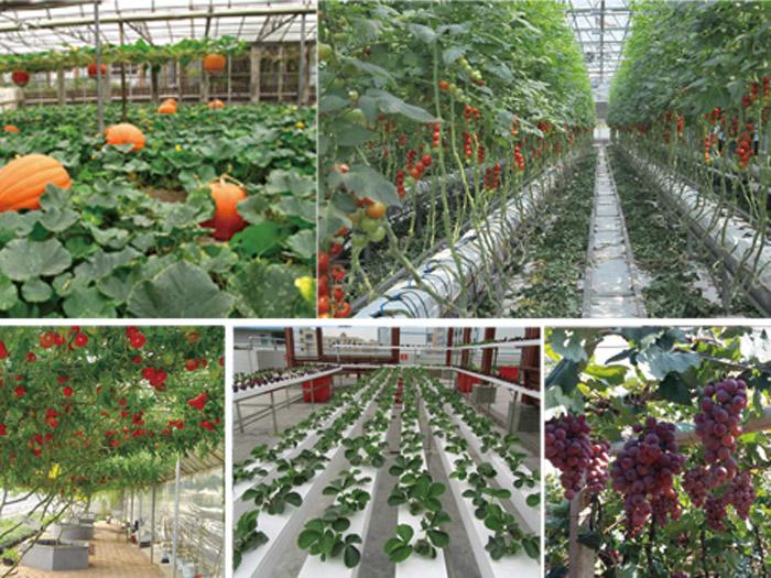 大棚蔬菜种植技术培训