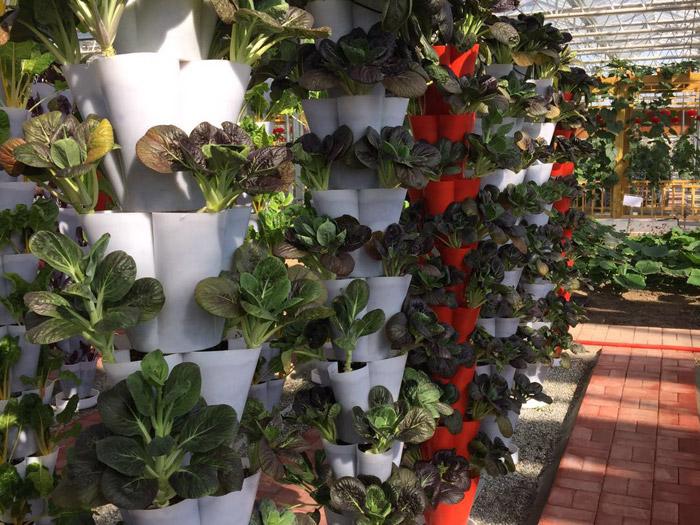 盆栽蔬菜育苗